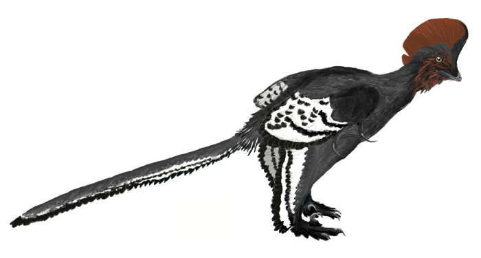 Anchiornis (SciiFii)