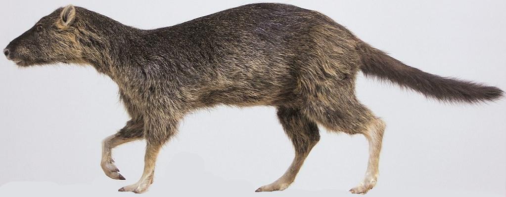 Amphirhagatherium (SciiFii)
