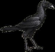 Bootie bird (SciiFii)