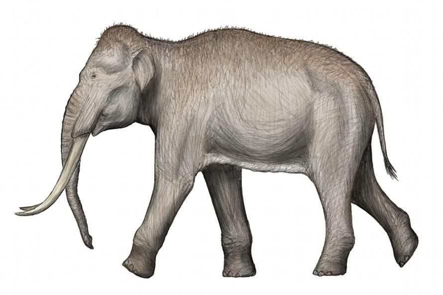 Palaeoloxodon antiquus (SciiFii)
