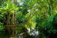 California Rainforest 3