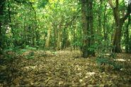 California Rainforest 8
