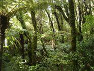California Rainforest 6