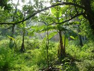 California Rainforest 13