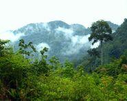 California Rainforest 10