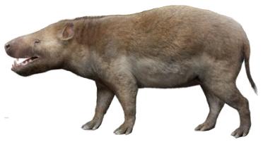 Achaenodon (SciiFii)