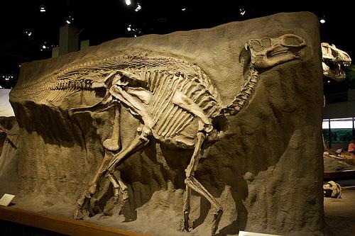 Kritosaurus Willardii
