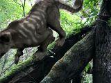 Thylacoline