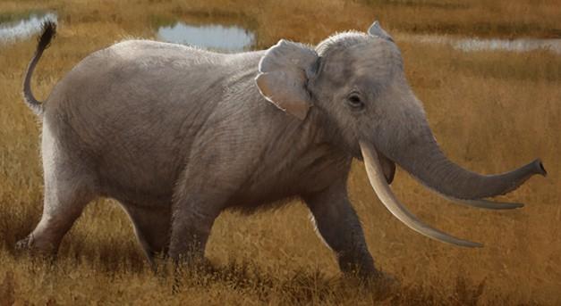 Sicilian dwarf elephant (SciiFii)