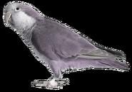 Purple polar parrot (SciiFii)
