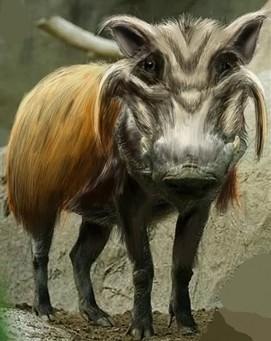 Woolly Warthog