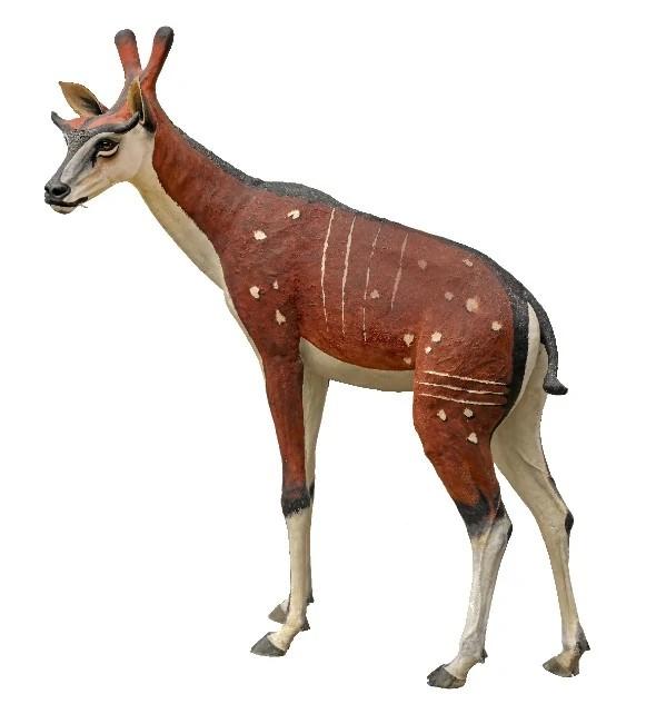 Ampelomeryx (SciiFii)