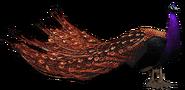 Black-eyed peafowl (SciiFii)