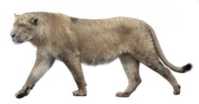 American lion (SciiFii)