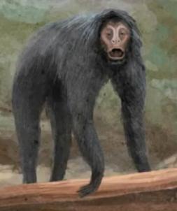 Ameranthropoides loysi (SciiFii)