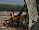 Oryxodontosaurus