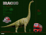 BRACHIO WP 1024-1-