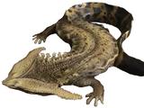 Diplocaulus (SciiFii)