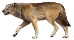 Dire wolf (SciiFii)