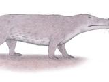 Ambulocetus (SciiFii)