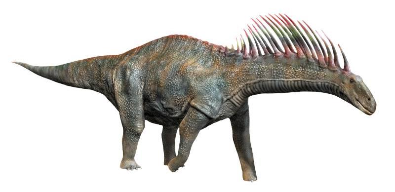 Amargasaurus V1 (SciiFii)
