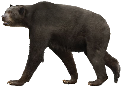 Short-faced bear (SciiFii)