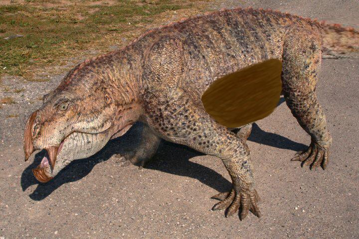 Ankyloplatypus