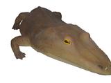 Mastodonsaurus (SciiFii)