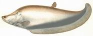 North American featherback (SciiFii)