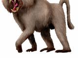 Western Giant Baboon
