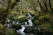 California Rainforest 7