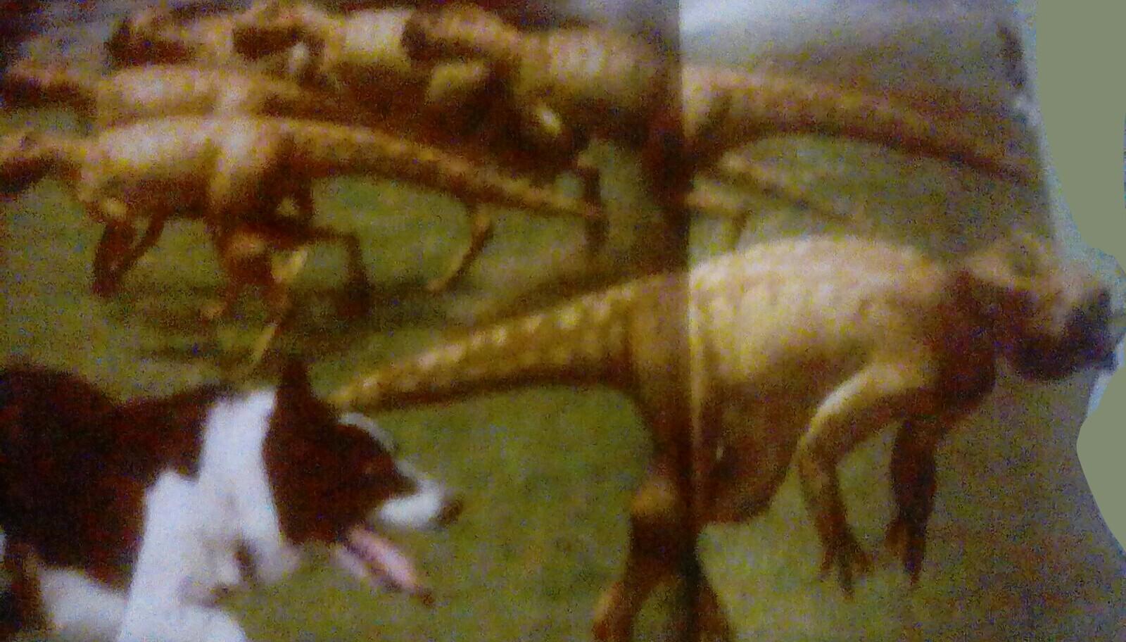 Domestic Psittacosaurus