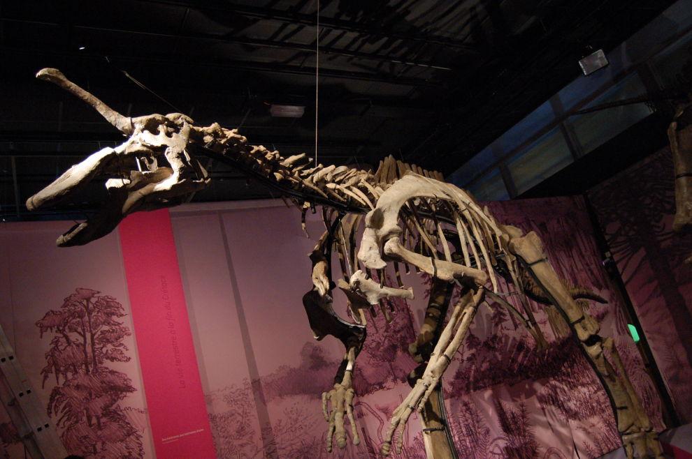 Lumbergosaurus