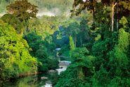 California Rainforest 15