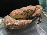 Kraby-Zabójcy