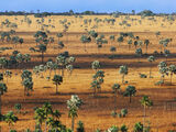 Palmowa Ziemia