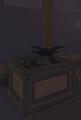 MandrakeThePlantRoom