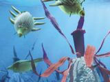 Рифовые плавунцы