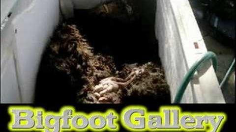 Bigfoot Proof, Real pictures