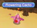 Flowering Cacto
