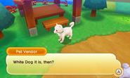 Castele whitedog