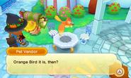 Portpuerto orangebird