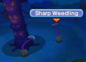 Sharp Weedling.png