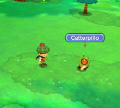 Catterpillo.JPG