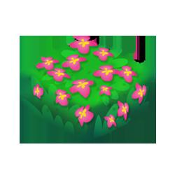 Fire Flower Bush