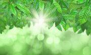 Groene-bladeren-bokeh-achtergrond 1048-2315.jpg