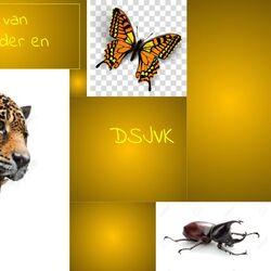 Libellester: De Verloren Verhalen/De Storm van Jaguar, Vlinder en Kever