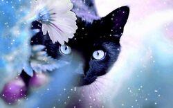 Beautiful-Cat-cats-16095933-1280-800.jpg