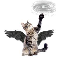 MagiCats: Star Twister