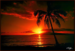 Island sunset.png